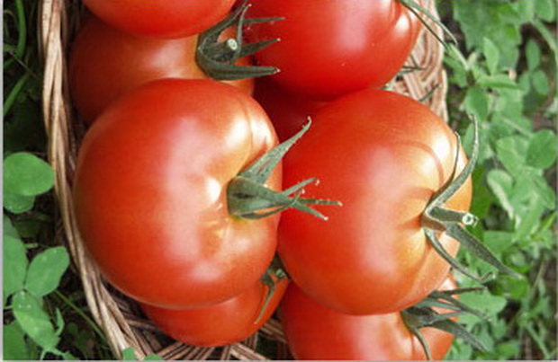 Сорт томата: Сита   f1