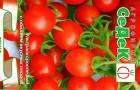 Сорт томата: Сладкоежка