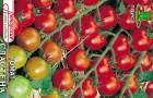 Сорт томата: Сластена