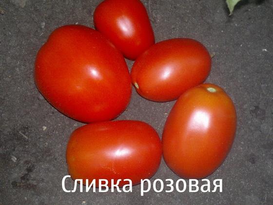 Сорт томата: Сливка розовая