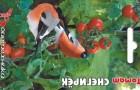 Сорт томата: Снегирек