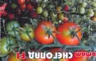 Сорт томата: Снегопад f1