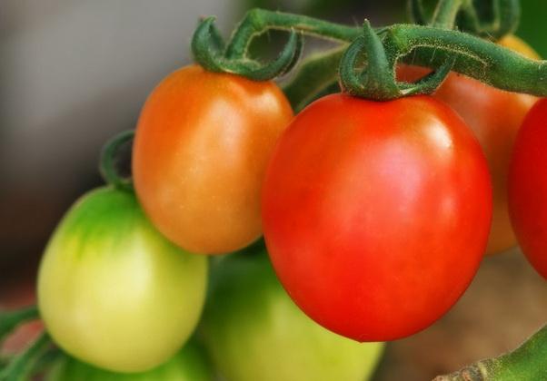 Сорт томата: Солнечная ягода
