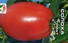 Сорт томата: Солоха