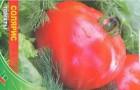 Сорт томата: Солярис