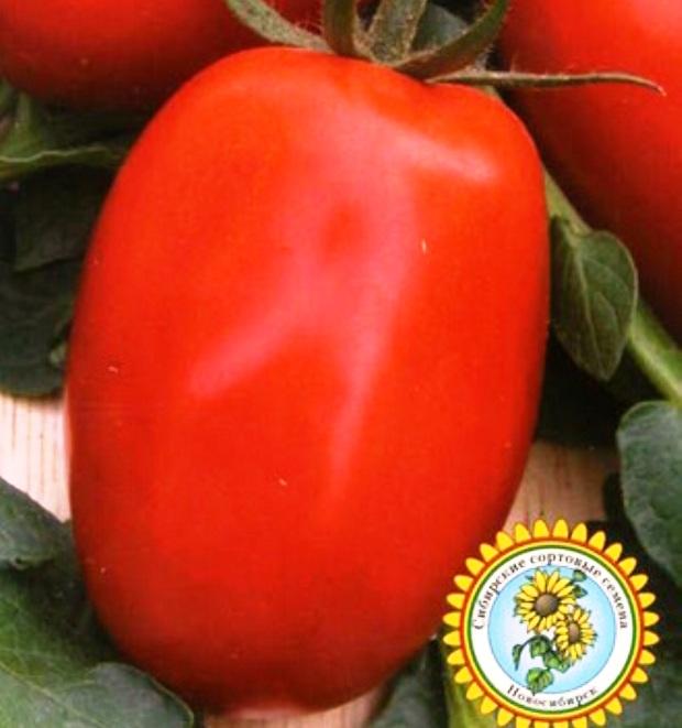 Сорт томата: Северная звезда