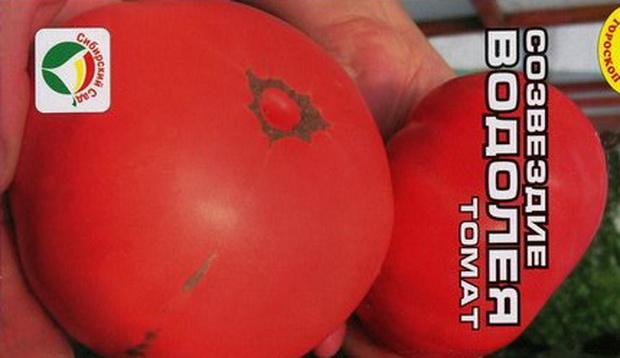 Сорт томата: Созвездие водолей