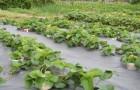 Способы выращивания и сохранения корневой системы рассады