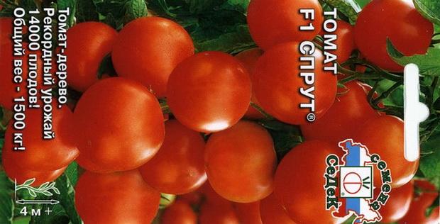Сорт томата: Спрут   f1