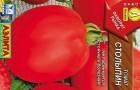 Сорт томата: Столыпин