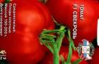 Сорт томата: Свекровь f1