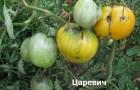 Сорт томата: Царевич