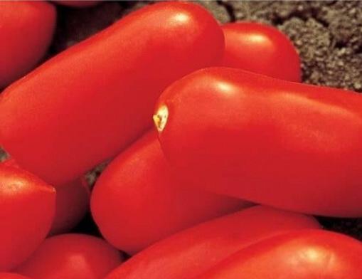 Сорт томата: Цилао   f1