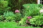 Цветы в тени (Видео)