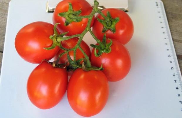 Сорт томата: Цюрупинский   f1