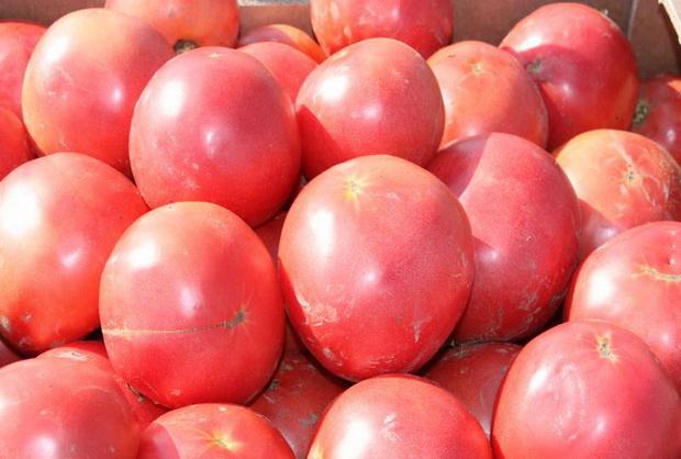 Сорт томата: Тарпан   f1
