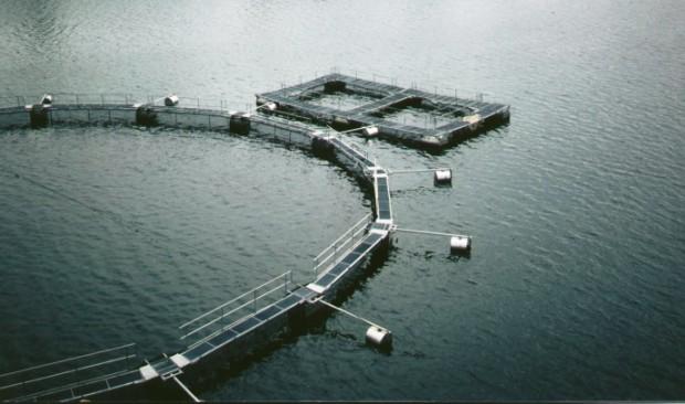 Технология разведения рыб