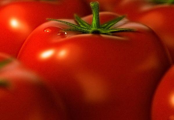 Сорт томата: Теремок   f1