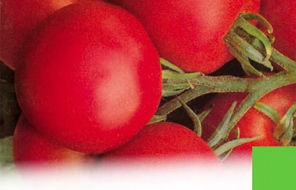 Сорт томата: Тести