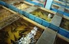 Типы рыбоводных хозяйств