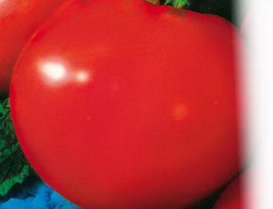 Сорт томата: Титан