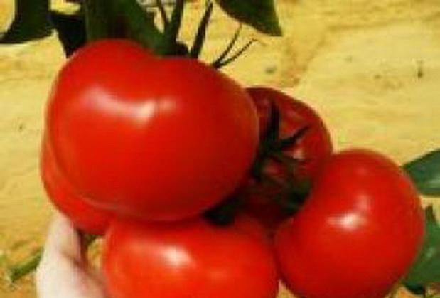 Сорт томата: Толин   f1