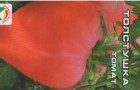 Сорт томата: Толстушка