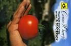 Сорт томата: Толстячок f1