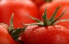Сорт томата: Турандот