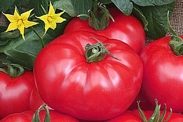 Сорт томата: Турмалин