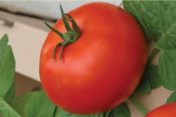 Сорт томата: Твист   f1