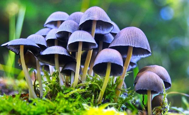 Ученом запретили собирать лечащие депрессию грибы