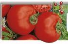 Сорт томата: Ураган f1