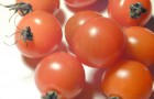 Сорт томата: Урбана