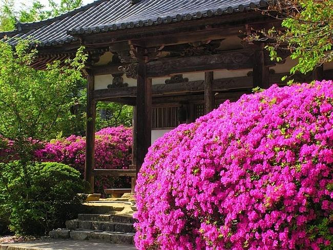 Устройство и общая схема японского сада