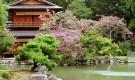 Вечнозеленые растения для японского сада