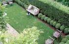 Вегетативное размножение растений для живой изгороди