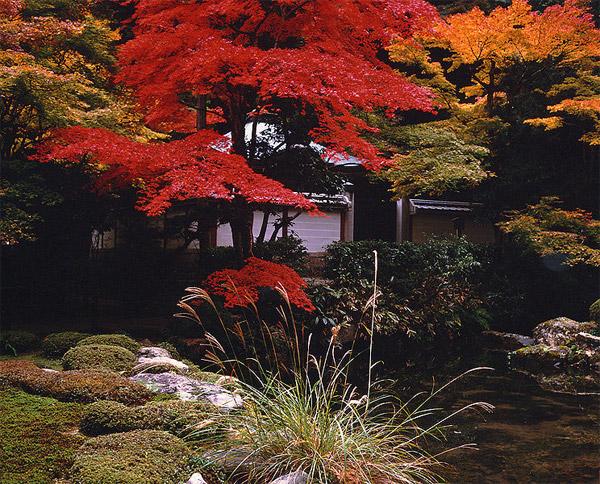 Весенний и осенний сад