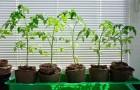 Выращивание рассады в емкостях