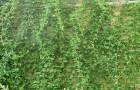 Вьющиеся лианы
