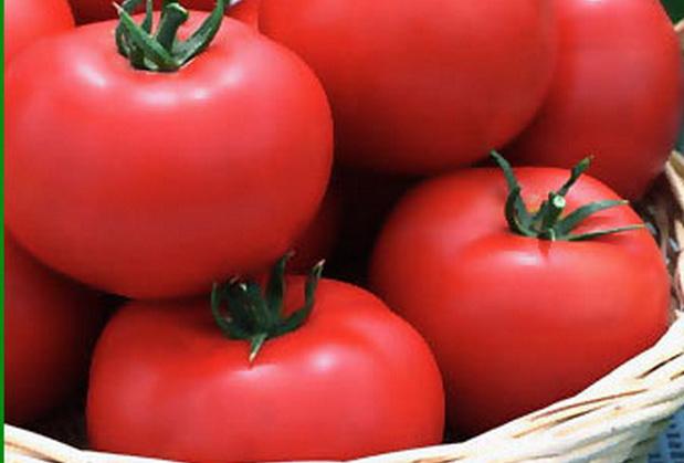 Сорт томата: Ягуар f1