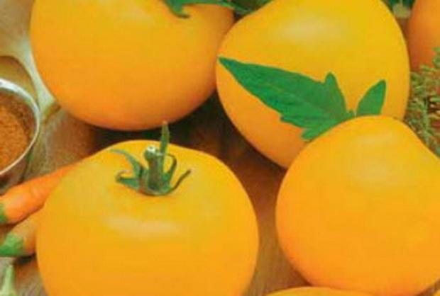 Сорт томата: Янтарный 530