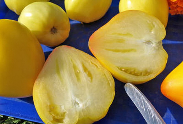 Сорт томата: Юла