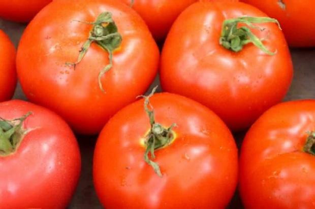 Сорт томата: Юранд   f1