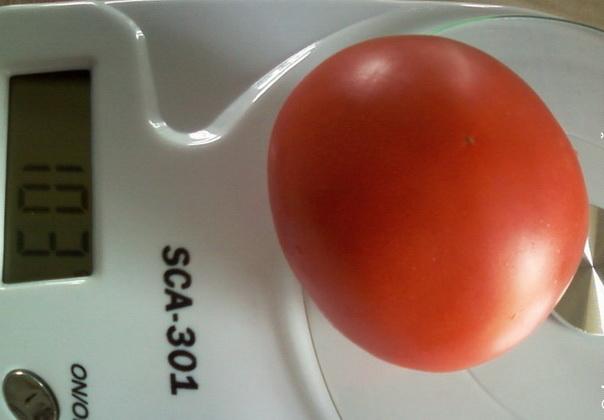 Сорт томата: Юрьевский