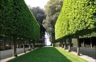 Живые изгороди, сочетающиеся с деревянными, металлическими, каменными оградами