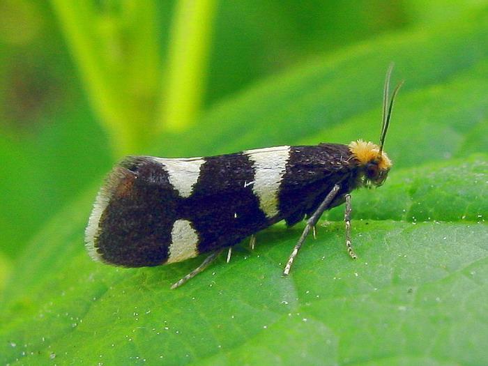 Защита живых изгородей от вредителей и болезней