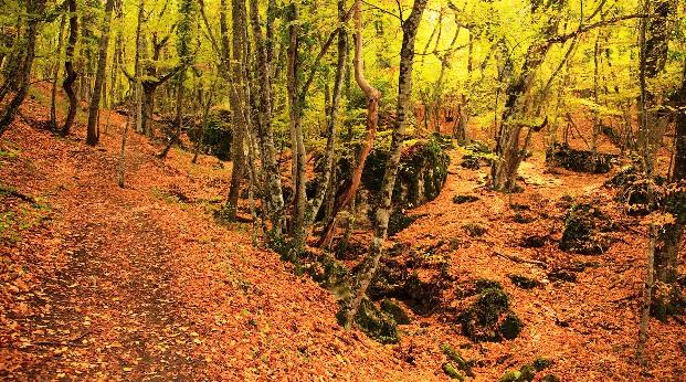 ориентиры а лесу
