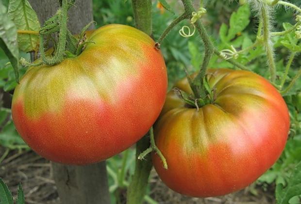 Сорт томата: Японский краб