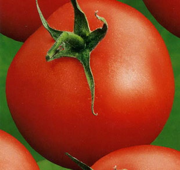 Сорт томата: Аббат